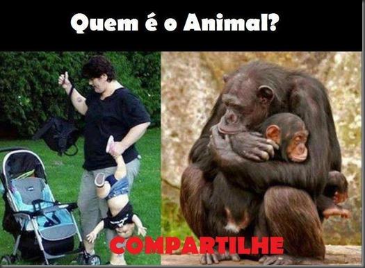 Quem é o animal